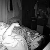 Il installe une caméra chez lui pour filmer son chat et explose de rire en regardant la vidéo