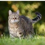 Comment faire maigrir son chat en surpoids ?
