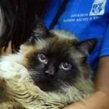 Il entre dans le refuge avec un chat, tous les volontaires sont sans voix en voyant le matou (Vidéo)
