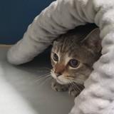 Ils trouvent un chat dans une boite devant le refuge et sont choqués par ce qu'ils découvrent