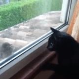 Quand un oiseau nargue un chat et lance une baston de regards (Vidéo du jour)