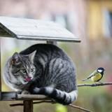 Un schizophrène tuait des chats pour sauver les oiseaux