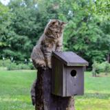 Pourquoi il faut arrêter de penser que les chats sont responsables de la disparition des oiseaux