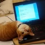 10 chats qui ont la ferme intention de vous empêcher de travailler