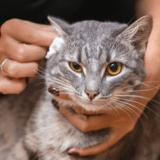 Quel soin des oreilles acheter pour chats en 2021 ?