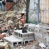 Ouragan Irma : les animaux de compagnie, ces indésirables des évacuations