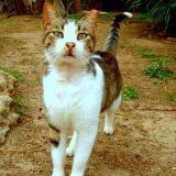 Disparu après l'ouragan Katrina un chat retrouve sa famille