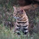 Cet adorable chat est le plus dangereux au monde