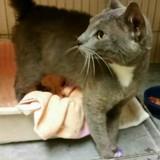 Un chat arrive au refuge, quand elle regarde ses pattes elle ne peut plus retenir ses larmes
