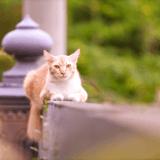 Philosophie féline : d'après le philosophe John Gray, nous aurions beaucoup à apprendre du mode de vie des chats