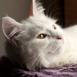 Mon chat perd ses poils, causes et solutions