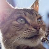 Elle perd son chat, 13 ans plus tard elle reçoit un appel et explose en sanglots