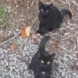 Photo de 3 chats dans la nature : un 4e chat se cache et c'est un casse-tête !