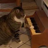 Elle prend l'apéritif chez sa voisine et voit le chat s'approcher du piano : ce qu'il fait la laisse bouche bée (Vidéo)