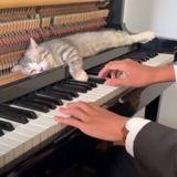 Il se met à jouer du piano : d'un bond, son chat s'installe à un endroit étonnant ! (Vidéo)