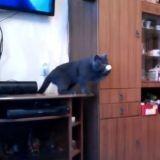 Ce chat joue au ping-pong mieux que vous (Vidéo du jour)