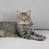Pourquoi votre chat fait-il pipi sur votre canapé (ou partout sauf dans sa litière) ?