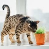Quelles plantes d'intérieur choisir quand on a un chat ?