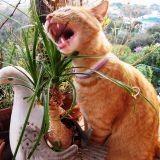 4 plantes de Noël toxiques pour vos animaux