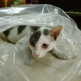 Des sacs plastique rendent ce chat complètement fou ! (Vidéo)