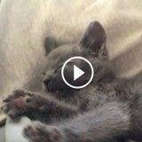 Ce chat pleure dès qu'on arrête de le caresser (Vidéo du jour)