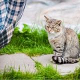 Un chat gris vole la vedette lors de la cérémonie du 11 novembre à Fougères !