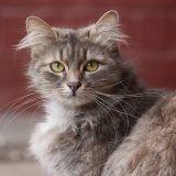 La mue du printemps chez le chat : à vos brosses !