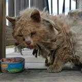 Ils sauvent un chat errant aux poils emmêlés, aujourd'hui il est impossible de le reconnaitre !
