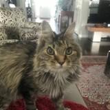 Elle confie son chat à ses grands-parents et avait tout prévu à un détail près