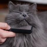 3 solutions pour vous débarrasser des poils que perd votre chien / chat