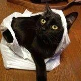 Pris la patte dans le sac en train de voler un poisson, ce chat a le plus drôle des réactions ! (Vidéo)