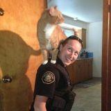 Le chat qui voulait devenir policier