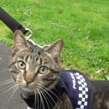 La police néo-zélandaise dévoile sa « division secrète des chats »