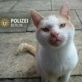 Attentat de Berlin : la police appelle à la discrétion avec un tweet d'un chat