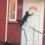 Elle voit un chat frapper à une porte, filme la scène et fait rire des millions de personnes (Vidéo)