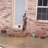 Quand un chat préfère passer par la grande porte ! (Vidéo du jour)