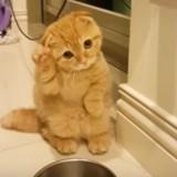 Ce chat a une adorable façon de demander à manger (Vidéo du jour)