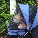 Une femme promène son chat dans une poussette : il réalise que c'est une star mondialement connue !