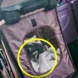 Dans le bus, elle se plaint qu'un chat dans une poussette occupe une place, mais la raison est bouleversante