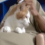 Des chats abandonnés trouvent une seconde chance en prison