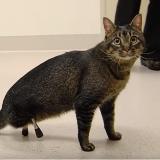 Grâce à ses prothèses et beaucoup d'amour, ce chat pourra bientôt courir et sauter !
