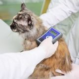 Les propriétaires de chats non identifiés sont désormais passibles d'une amende de 750 euros