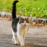 Les mouvements de queue du chat ont-ils une signification ?