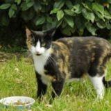 Abbi, le chat justicier qui réussit à faire tomber  un voleur dans les mains de la police !