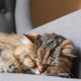 Arthrose du chat : Quelles différences avec les rhumatismes et l'arthrite ?