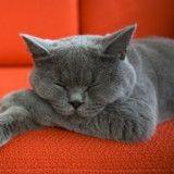 La Préhistoire du chat : les comportements « bizarres » du chat expliqués