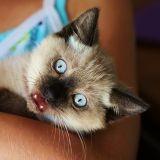 Les chats sont bavards !