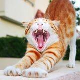 Santé bucco-dentaire du chat : ces 4 signes qui doivent vous alerter
