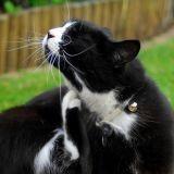 5 idées reçues sur les parasites du chat et du chien