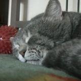 Le chat qui se prend pour un canard (Vidéo du jour)